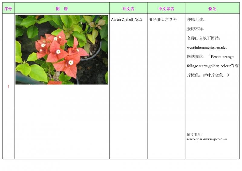 名称未核准的三角梅栽培品种收录表002.jpg