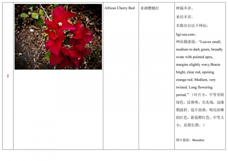 名称未核准的三角梅栽培品种收录表003.jpg