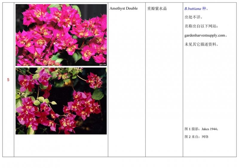 名称未核准的三角梅栽培品种收录表006.jpg