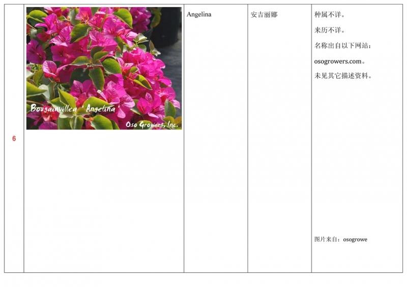名称未核准的三角梅栽培品种收录表007.jpg