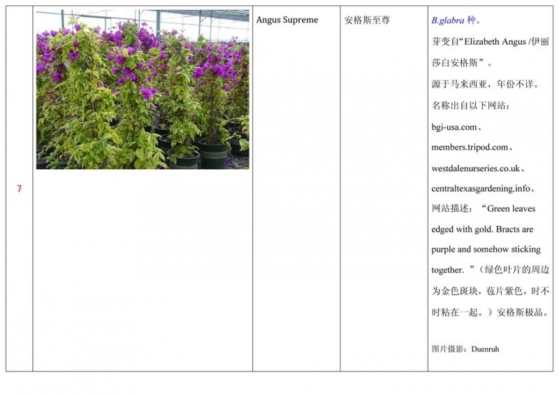 名称未核准的三角梅栽培品种收录表008.jpg