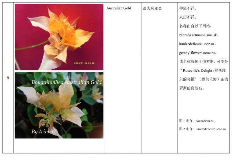名称未核准的三角梅栽培品种收录表010.jpg
