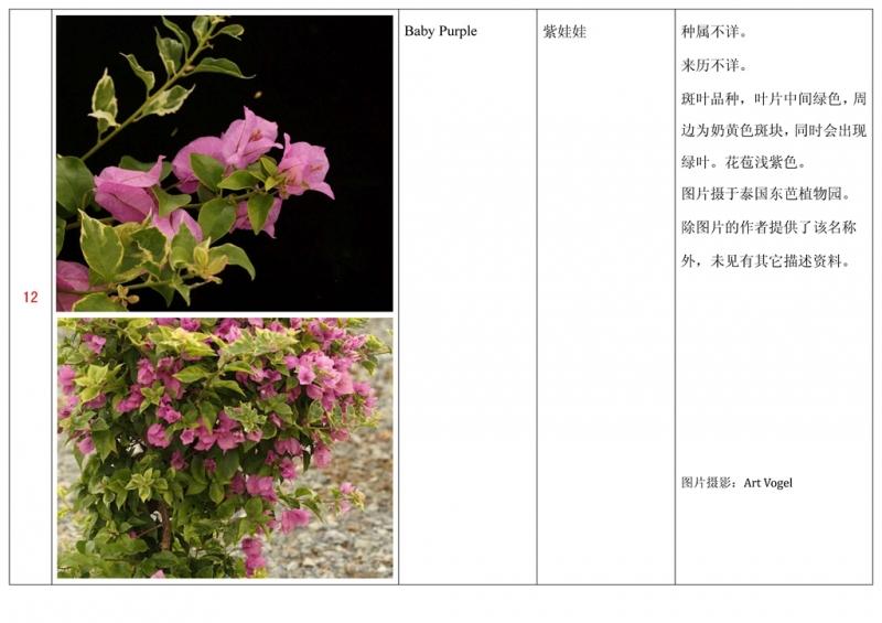 名称未核准的三角梅栽培品种收录表013.jpg