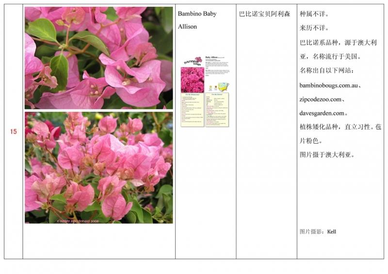 名称未核准的三角梅栽培品种收录表016.jpg
