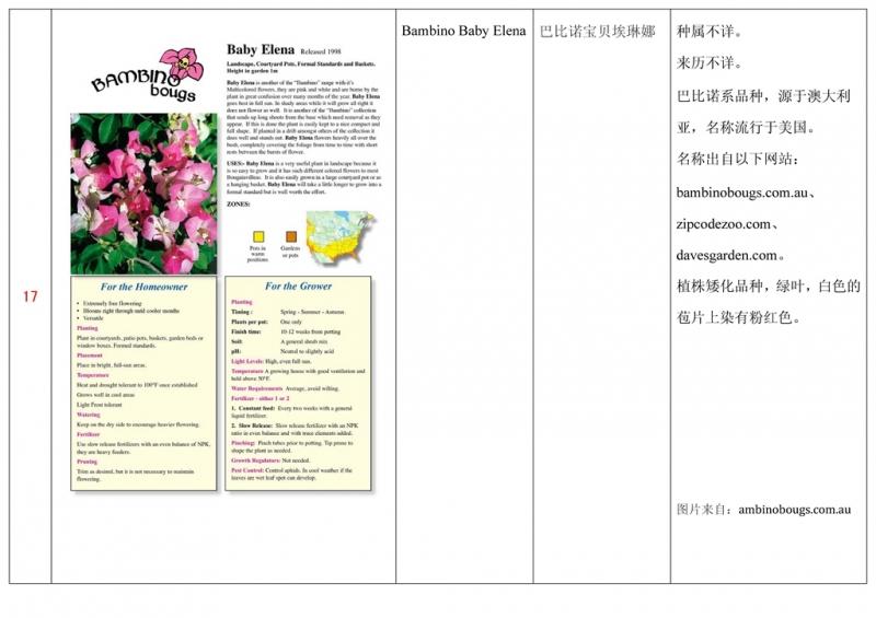 名称未核准的三角梅栽培品种收录表018.jpg