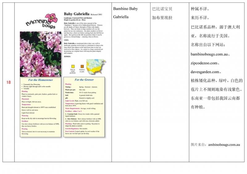 名称未核准的三角梅栽培品种收录表019.jpg