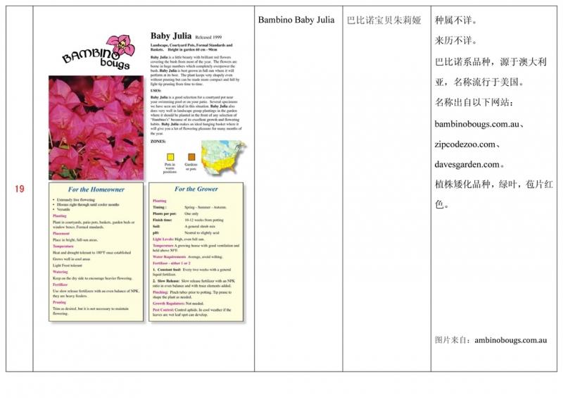 名称未核准的三角梅栽培品种收录表020.jpg