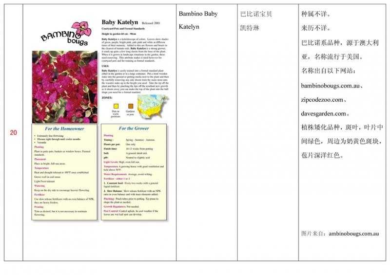 名称未核准的三角梅栽培品种收录表021.jpg