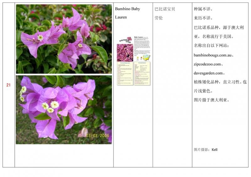 名称未核准的三角梅栽培品种收录表022.jpg