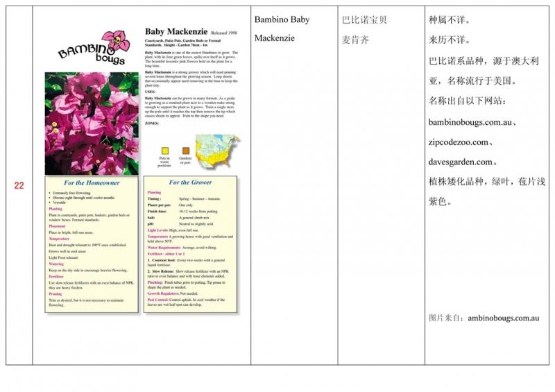 名称未核准的三角梅栽培品种收录表023.jpg