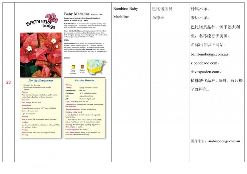 名称未核准的三角梅栽培品种收录表024.jpg