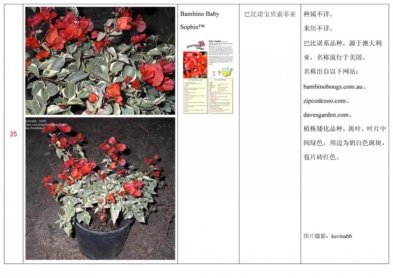 名称未核准的三角梅栽培品种收录表026.jpg