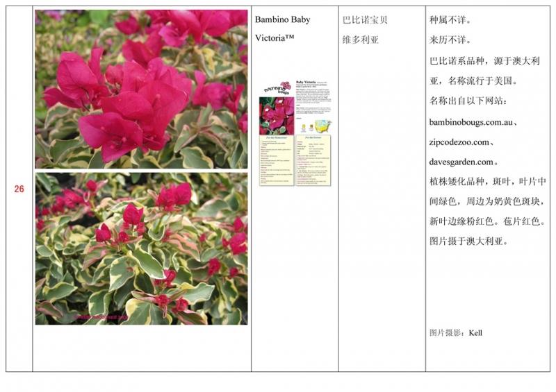 名称未核准的三角梅栽培品种收录表027.jpg