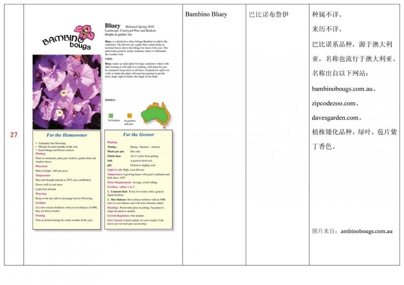 名称未核准的三角梅栽培品种收录表028.jpg