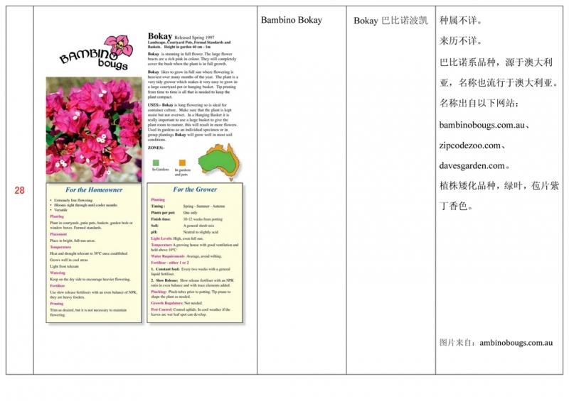 名称未核准的三角梅栽培品种收录表029.jpg