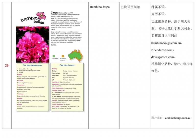 名称未核准的三角梅栽培品种收录表030.jpg
