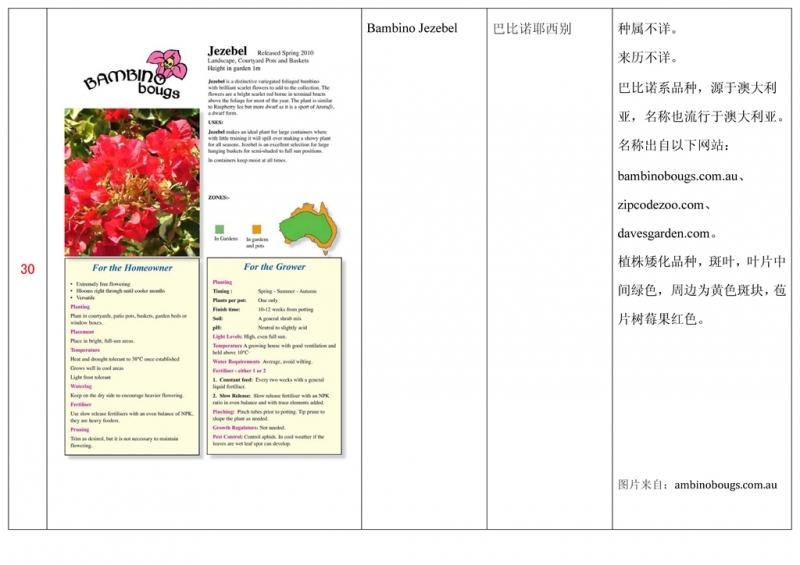 名称未核准的三角梅栽培品种收录表031.jpg