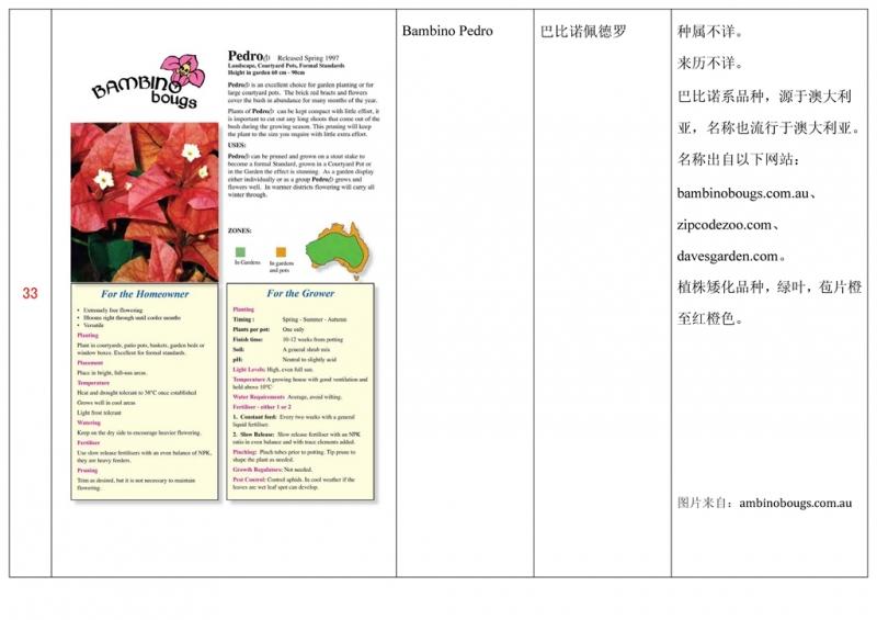 名称未核准的三角梅栽培品种收录表034.jpg