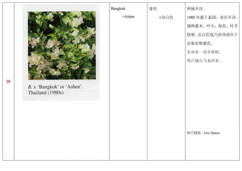 名称未核准的三角梅栽培品种收录表037.jpg