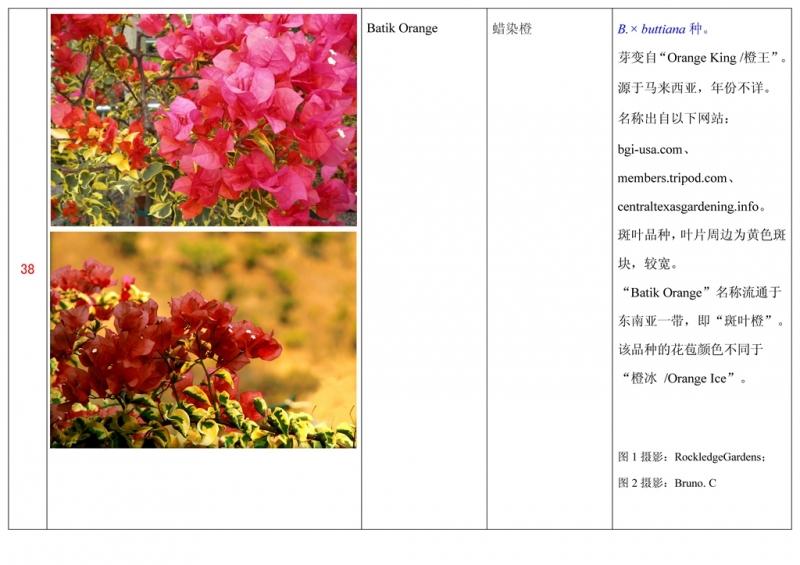 名称未核准的三角梅栽培品种收录表039.jpg