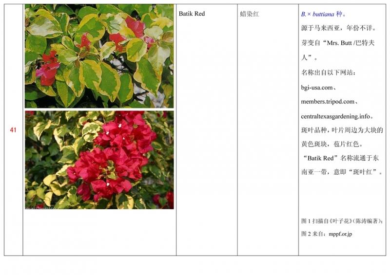 名称未核准的三角梅栽培品种收录表042.jpg