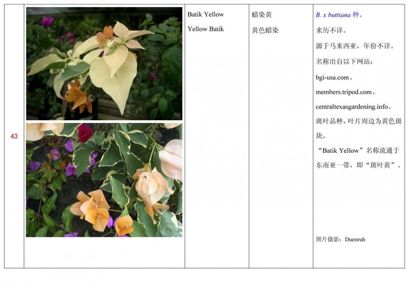 名称未核准的三角梅栽培品种收录表044.jpg