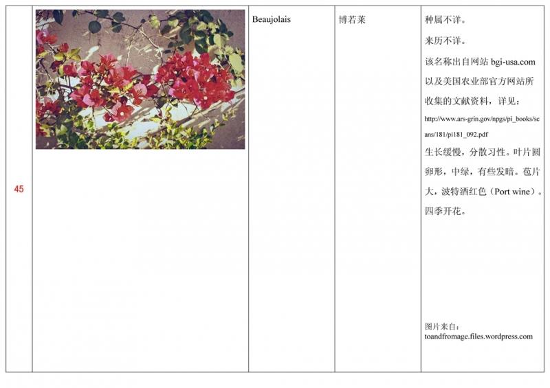 名称未核准的三角梅栽培品种收录表046.jpg