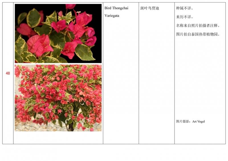 名称未核准的三角梅栽培品种收录表049.jpg