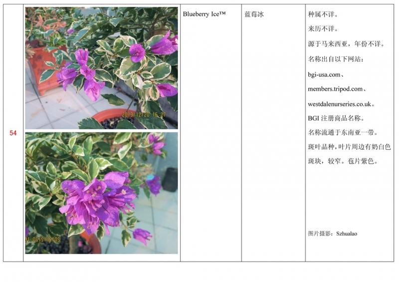 名称未核准的三角梅栽培品种收录表055.jpg