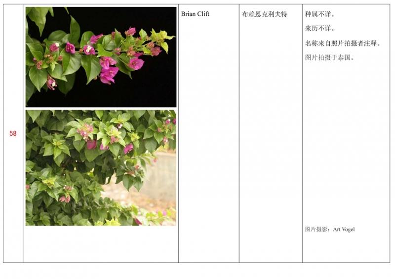 名称未核准的三角梅栽培品种收录表059.jpg