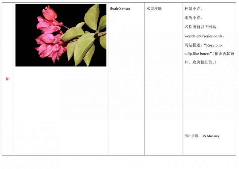名称未核准的三角梅栽培品种收录表062.jpg