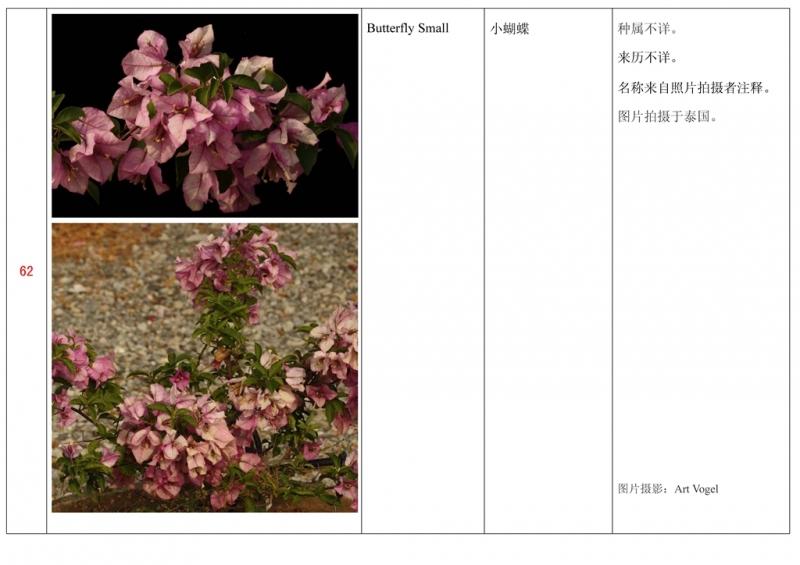 名称未核准的三角梅栽培品种收录表063.jpg