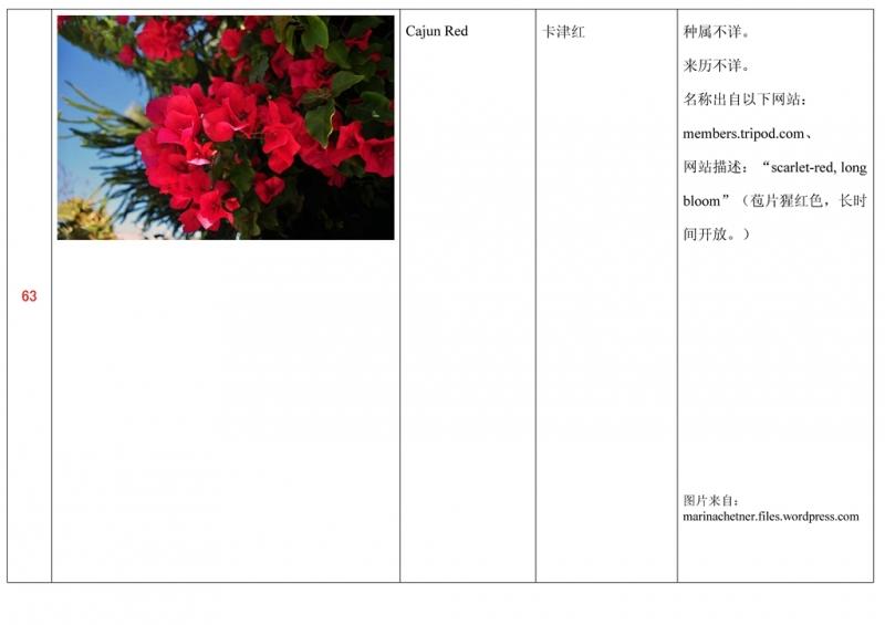 名称未核准的三角梅栽培品种收录表064.jpg