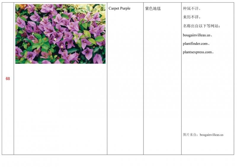 名称未核准的三角梅栽培品种收录表069.jpg