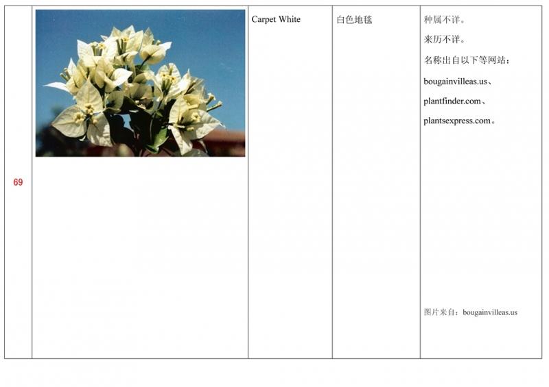 名称未核准的三角梅栽培品种收录表070.jpg
