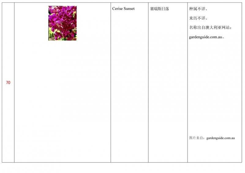 名称未核准的三角梅栽培品种收录表071.jpg