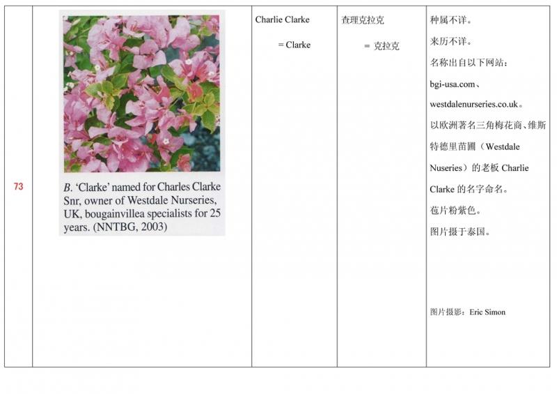 名称未核准的三角梅栽培品种收录表074.jpg