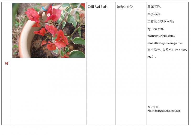 名称未核准的三角梅栽培品种收录表077.jpg