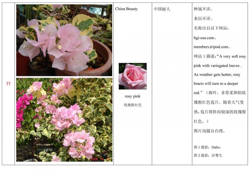 名称未核准的三角梅栽培品种收录表078.jpg