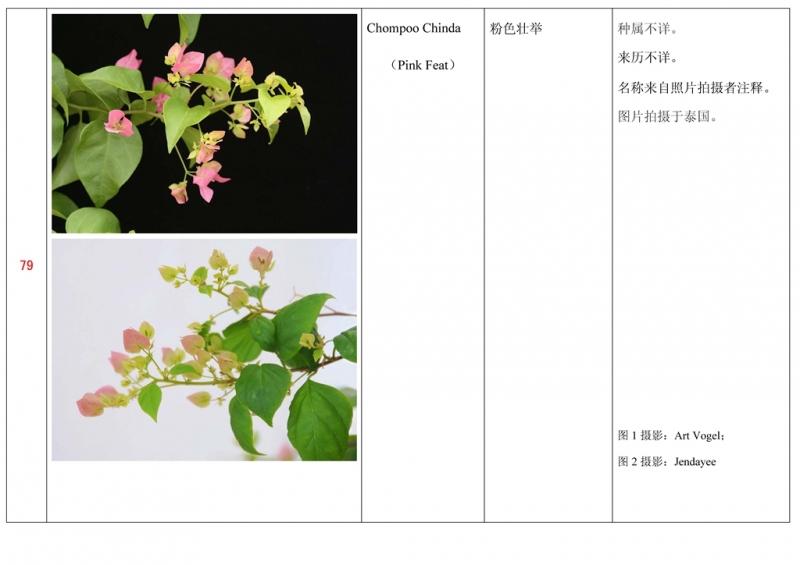 名称未核准的三角梅栽培品种收录表080.jpg