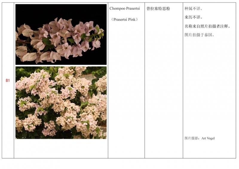 名称未核准的三角梅栽培品种收录表082.jpg