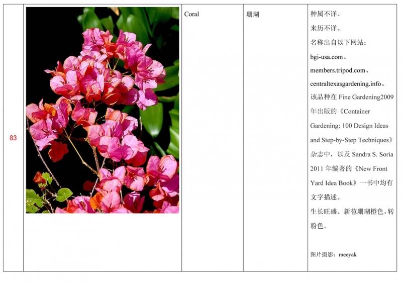 名称未核准的三角梅栽培品种收录表084.jpg