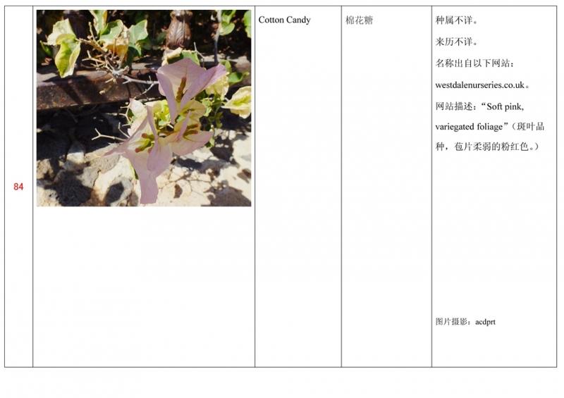 名称未核准的三角梅栽培品种收录表085.jpg