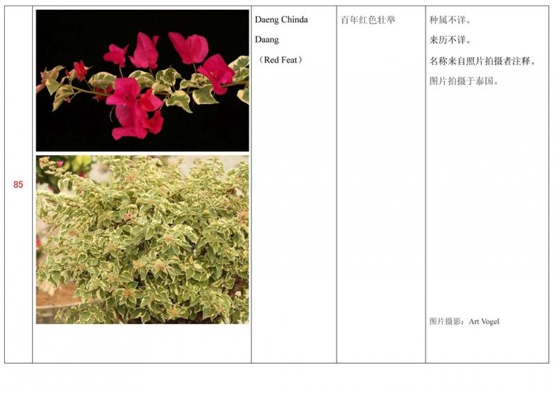 名称未核准的三角梅栽培品种收录表086.jpg
