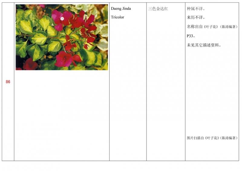 名称未核准的三角梅栽培品种收录表087.jpg