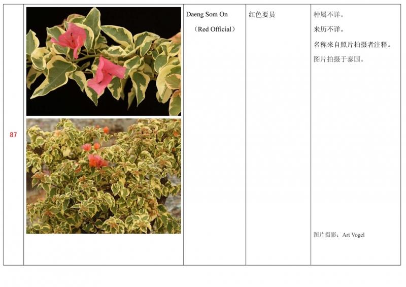 名称未核准的三角梅栽培品种收录表088.jpg