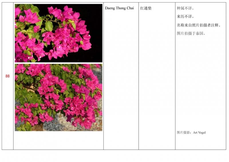 名称未核准的三角梅栽培品种收录表089.jpg