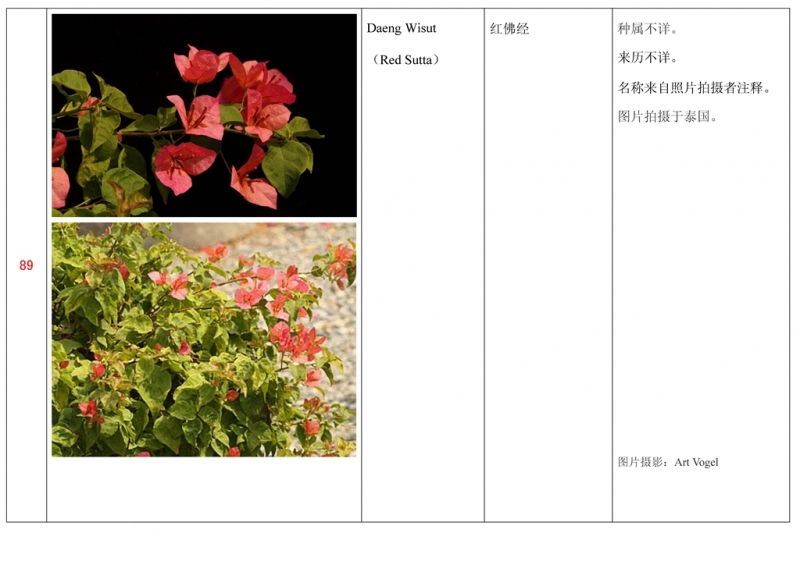 名称未核准的三角梅栽培品种收录表090.jpg