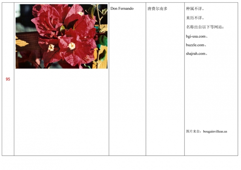 名称未核准的三角梅栽培品种收录表096.jpg