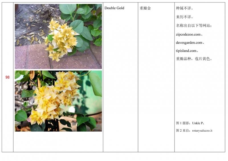 名称未核准的三角梅栽培品种收录表099.jpg